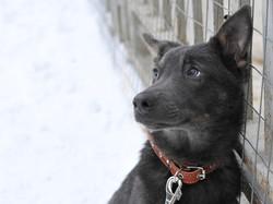 Возьму щенка из приюта в Москве
