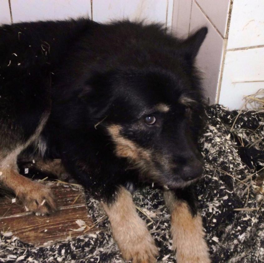 Собака из отлова в Зеленограде