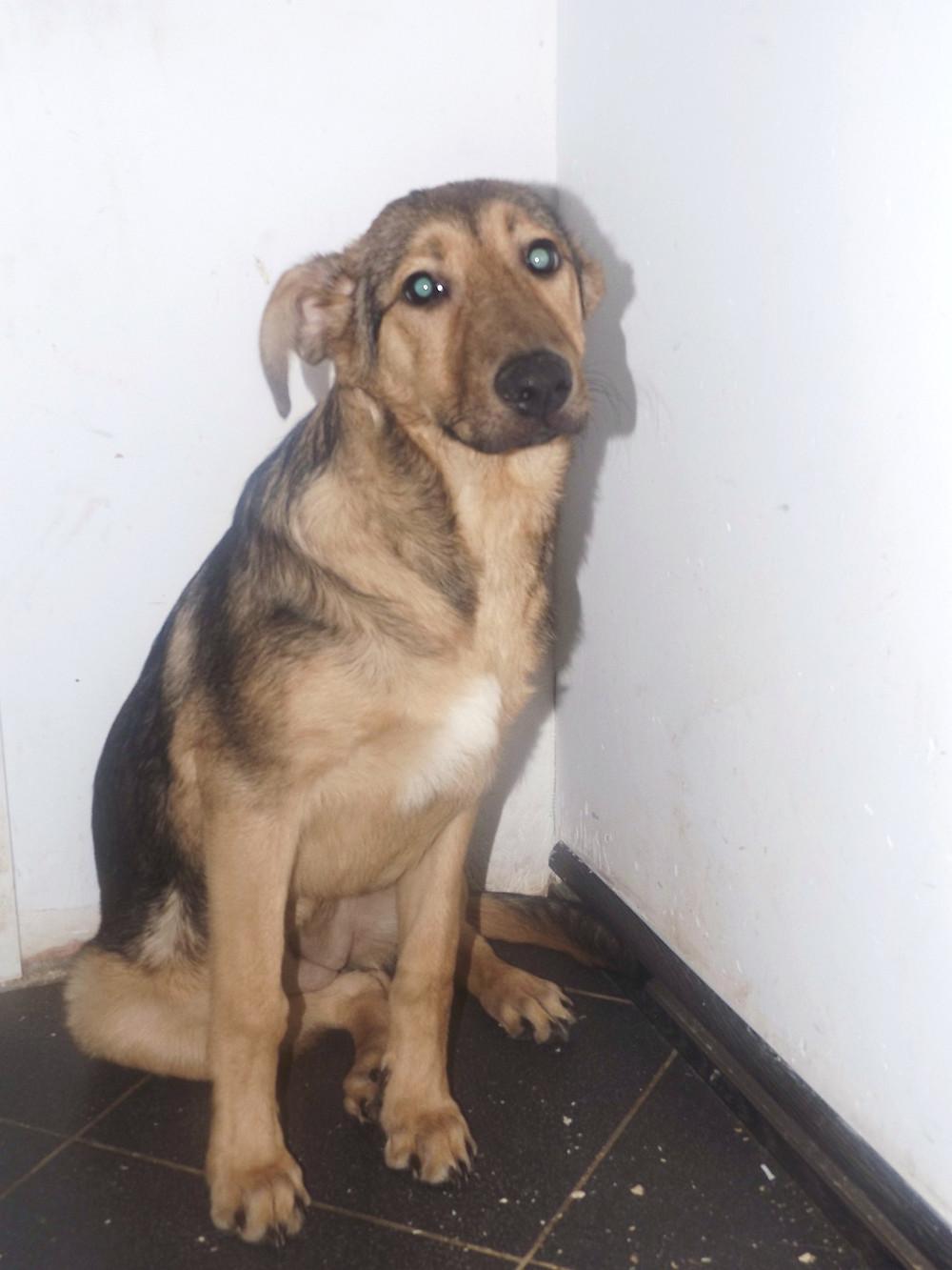 Собака с отлова, привезена из Тушино, приют для собак в Москве