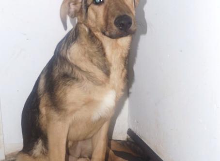 Собаки из отлова Пресненский р-н; Тушино; Зеленоград