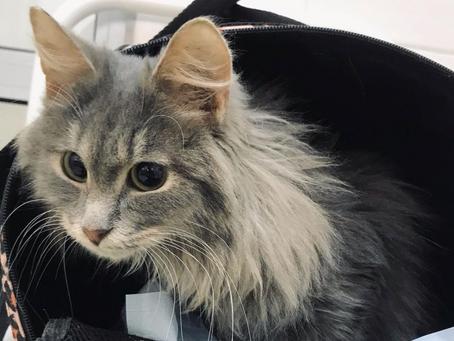 Кошкам нужна Ваша помощь! Открыт сбор:
