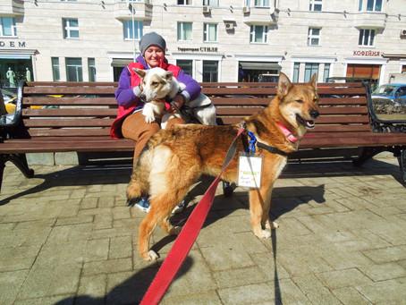 """Собаки приюта на фестивале """"Пасхальный дар"""""""