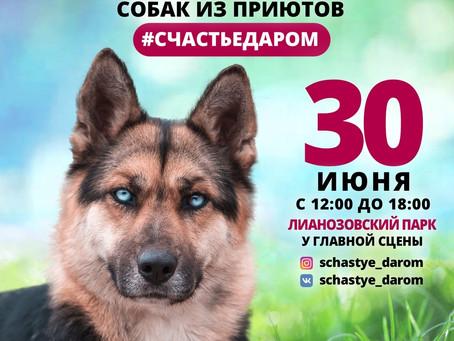 """Выставка """"Счастье даром"""" 30.06.2019"""
