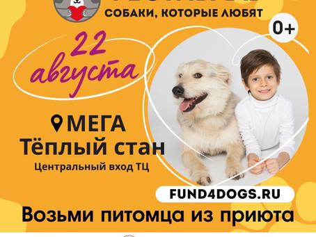 """Едем на фестиваль """"Собаки, которые любят"""" 22.08.2021"""