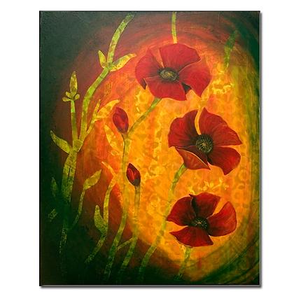 Field Poppy©