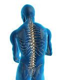 Colonne vertébrale intéractive