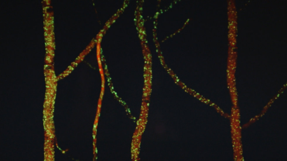 myceliumGreen0.jpg