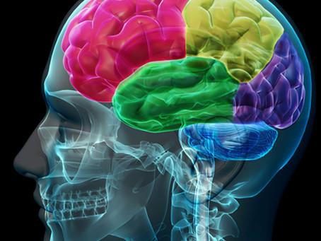 Comment fonctionne notre mémoire ?