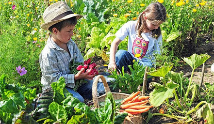 children and vegetable gardens how to make a vegetable garden for kids