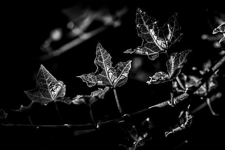 Hedera, Nature around my House
