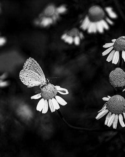 vlinder, Nature around my Hous