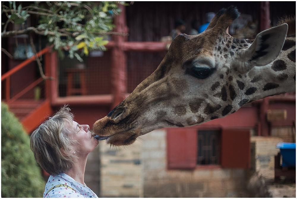 giraffe kisses woman
