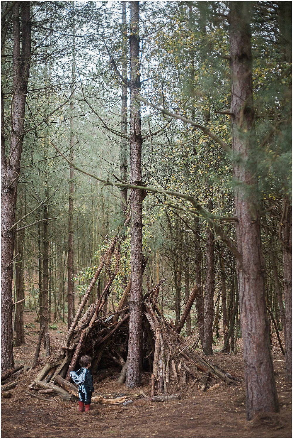dens in the woods
