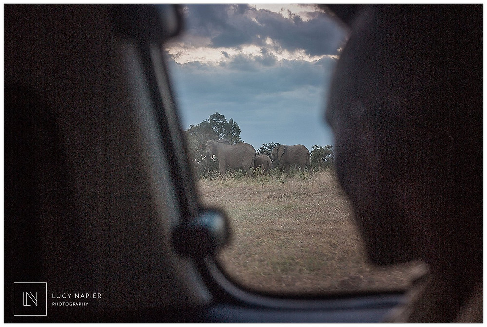 wild elephants safari Lolldaiga hills