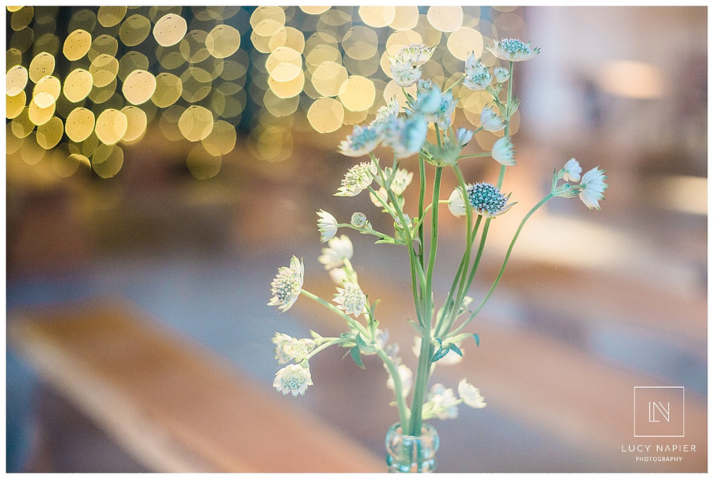 Flowers against the backdrop of twinkly lights