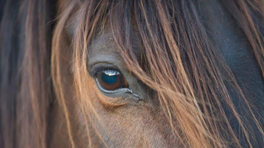 relation equine