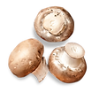 champignons2.png