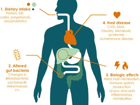 Our gut microbiome ages too.