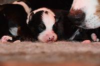 dressage chiens à domicile Gard et Hérault taxi animalier