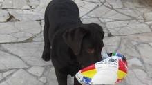 EDUCANIN30, éducation du chien dans le Gard et l'Hérault