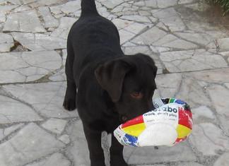 EDUCANIN, éducation du chien dans le Gard et l'Hérault