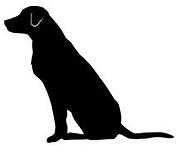 Dressage chiens Gard Herault taxi animalier