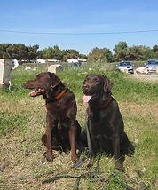 www.educanin30.com Dressage chiots et chiens à domicile