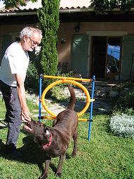 dressage chien gard