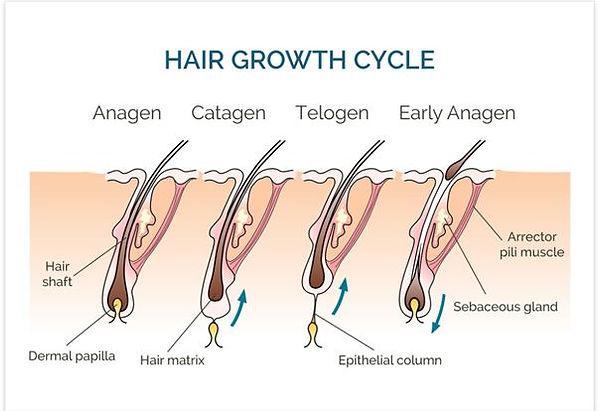 hair growth.JPG