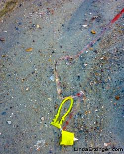 """""""Yellow Fish"""", 2011."""