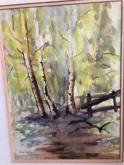 Birch Trees #9799