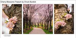 Cherry Blossoms Triptych_Chuck Burdick_l
