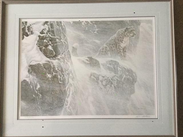 High Kingdom Snow Leopard