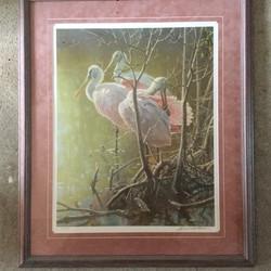 Mangrove Morning Roseate Spoonbills