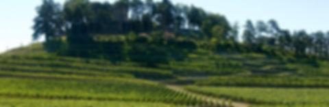 Chateau de Pressac Vignoble_edited.jpg