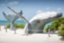 turks-and-caicos-whale.jpg