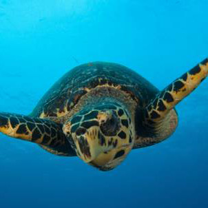 Turks and Caicos a Safe Haven for Sea Turtles