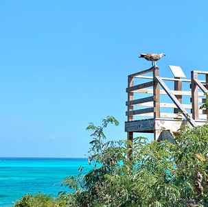 March 2020 Turks and Caicos Resorts Update