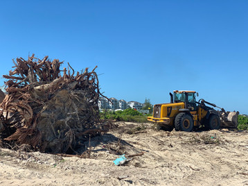 new-andaz-hotels-tree-on-site.jpeg