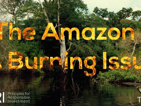 The Amazon - a burning issue