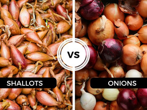 The Shallot and its role in the Netherlands