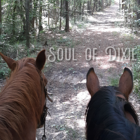 Caesar and Laredo getting some trail time.
