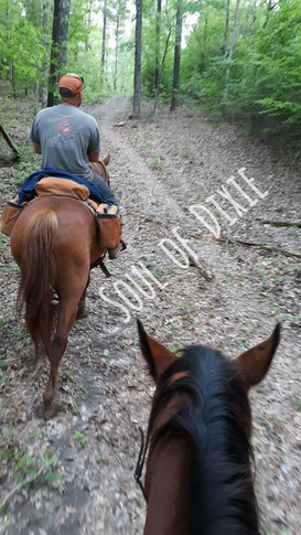 Some trail therapy with Calamity and Paso.