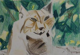 Lynx-1.jpg