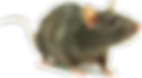 3-2-rat-free-png-image.png