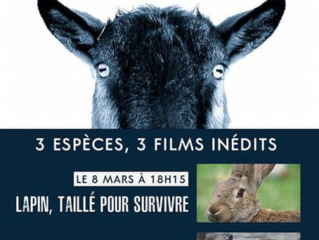 """Pas Si Bêtes !"" - Série Documentaire ARTE"