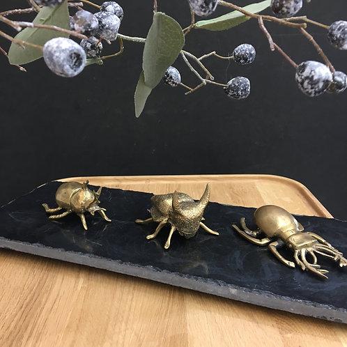 Brass Beetles - Scarab, Helmut & Rhinoceros Beetles