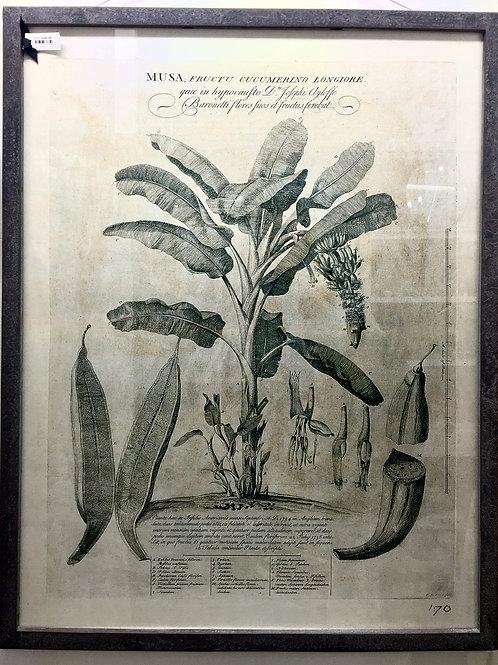 'Grey Palm Tree' Print