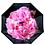 Thumbnail: Peony Reverse Umbrella
