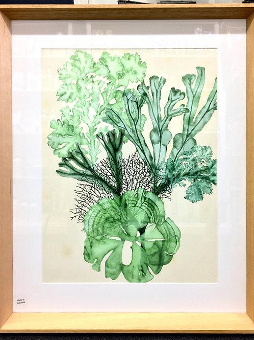 'Seaweed Composition' Framed Print